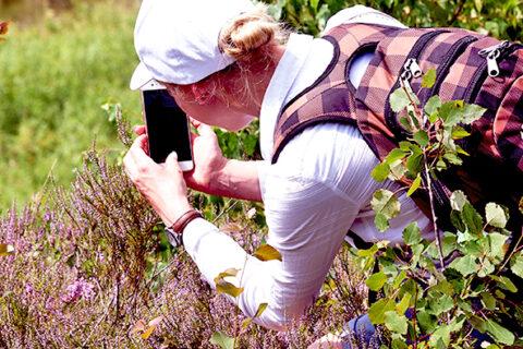 Изучайте и собирайте травы