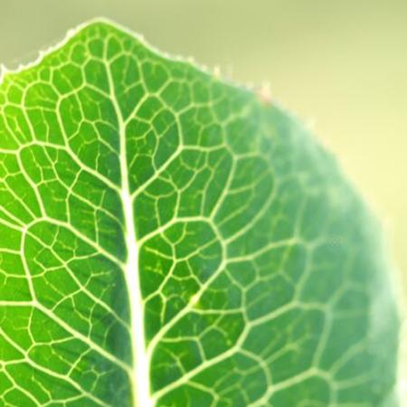 Действие лекарственных растений и способы приготовления оздоровительных средств из них