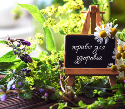 Лекарственные растения Рассрочка